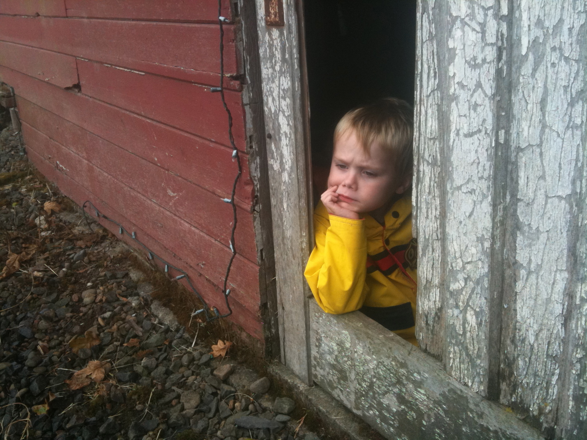 Jack sitting in the barn